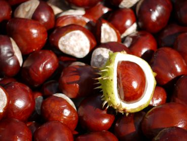 Chestnuts for handicraft work and decorating (24 pcs.)