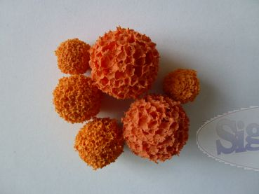 Sponge- ball- Set for Encaustic